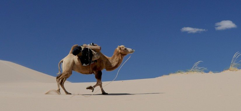 Camel out of the bag at Qatar