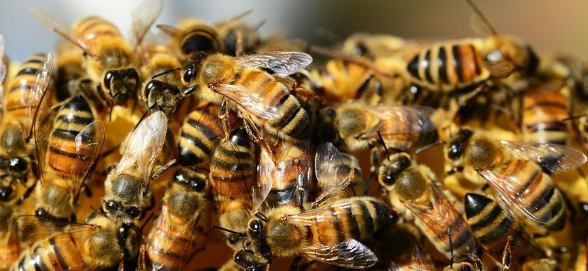 Bees are the latest air cargo buzz word