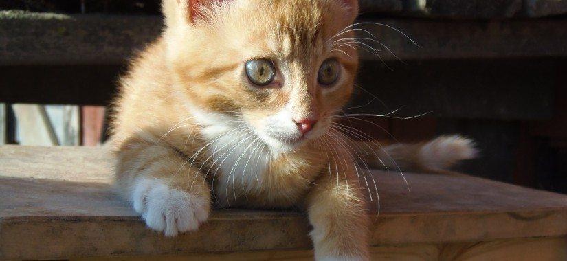 Stowaway kitten given to Emirates staff